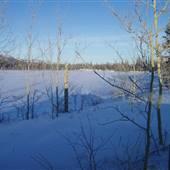 Winter Farms