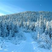 Mt MacIntyre November