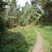 Kaloko Cloud Forest