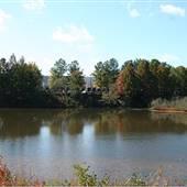 Pinckneyville Park