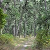 Long Island State Pine Barrens Preserve