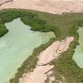 Zufaf Island- Mangrover جزيرة زفاف – غابة المانجرف