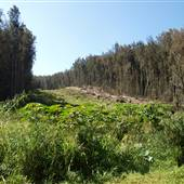 Hamakua Forest