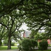 Majestic Oaks