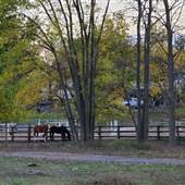 Orchard Park Stables