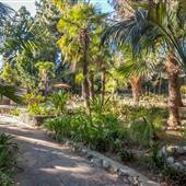 Tropical Paradise in LA