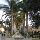 40 Palms