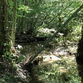 Bamboo Creek