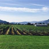 Winston Estate Vineyard