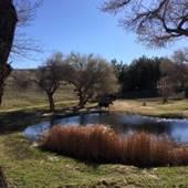 Double Barrel Springs