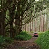 Waipio Forest