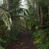 Kona Cloud Forest Sanctuary